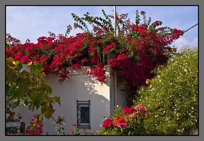 Late september blooming