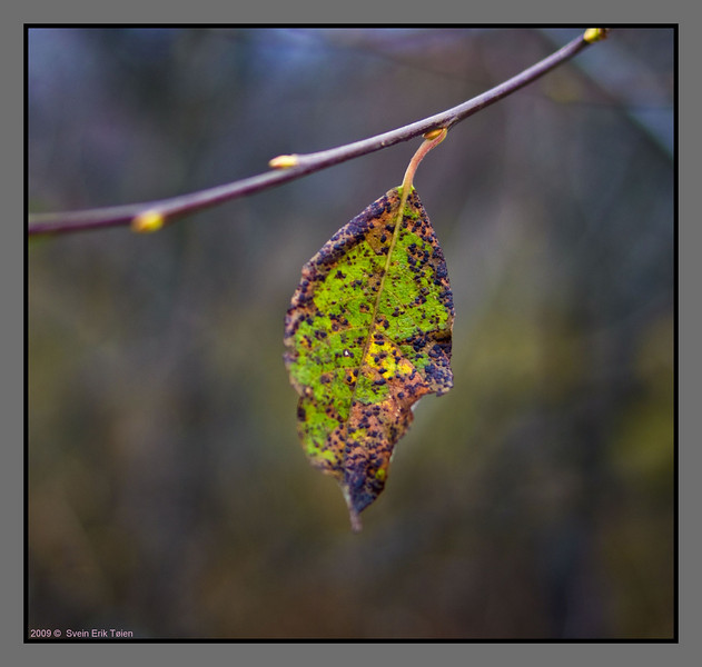Beauty of decay<br /> Autumn, Bodø backlands