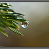 Droplets on juniper - II