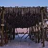 2009-02-28-17-03_0606_K10DUSM