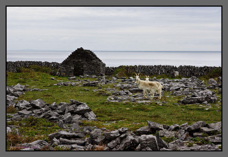 Stony landscape with goats<br /> Killeany