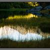 Reflections and reed<br /> Festvåg backlands