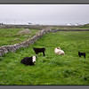 Pastoral<br /> Killeany