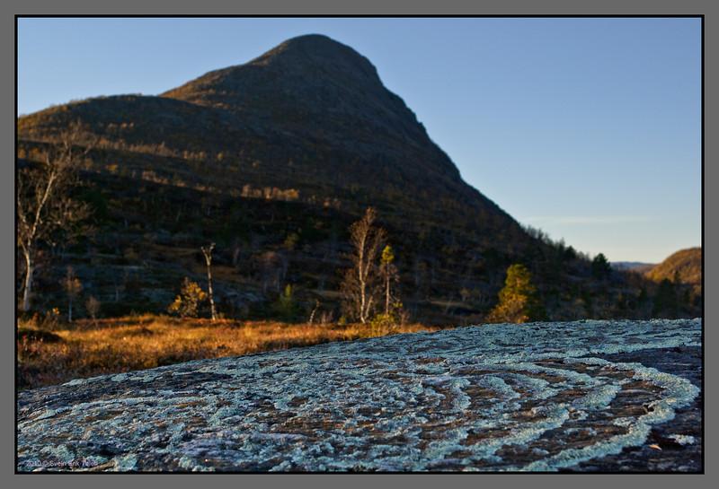 Lichen stone<br /> Tollådalen, Nordland