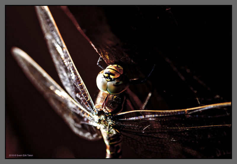 Dragonfly on rafter<br /> Bodø