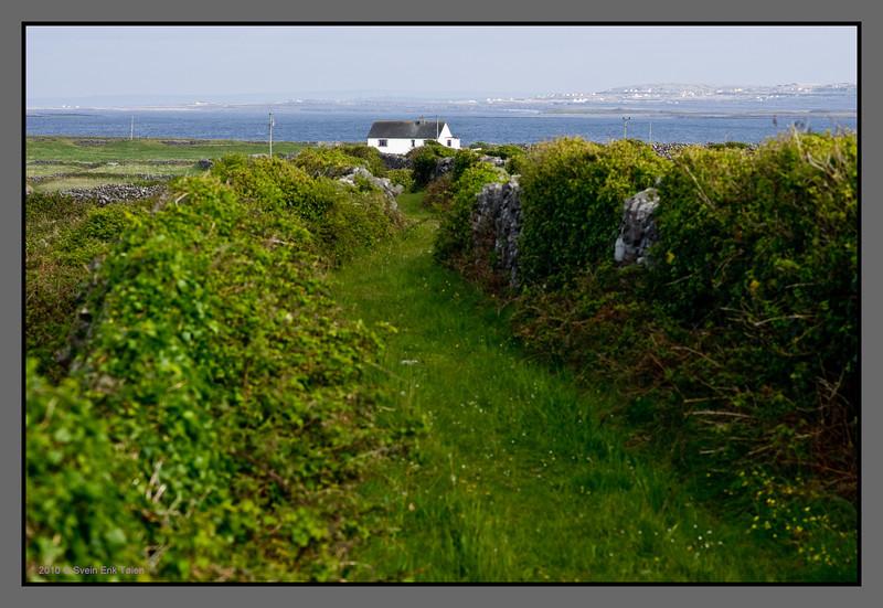 Vegetated path<br /> by Kilronan