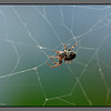 Mending the net<br /> Spider. Bodø