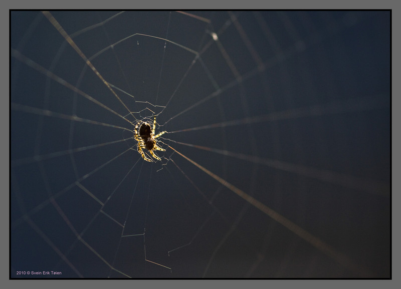 Another net, another spider