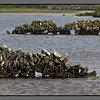 Rocking across water<br /> Stone fences in small lake, Kilronan