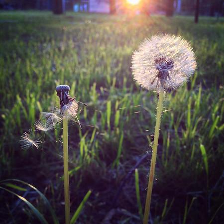 20150529-0503-SiPhone-IMG_6785