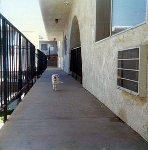 mysterydog.jpg