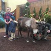 After Brunch With Santa, cousins Nick O'Brien, left, and Connor Schuck have their picture taken with a reindeer at Elmwood Park Zoo, Norristown, Saturday, Dec. 23,  2017. (Joe Barron ― Digital First Media)
