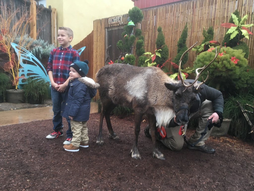. After Brunch With Santa, cousins Nick O\'Brien, left, and Connor Schuck have their picture taken with a reindeer at Elmwood Park Zoo, Norristown, Saturday, Dec. 23,  2017. (Joe Barron � Digital First Media)