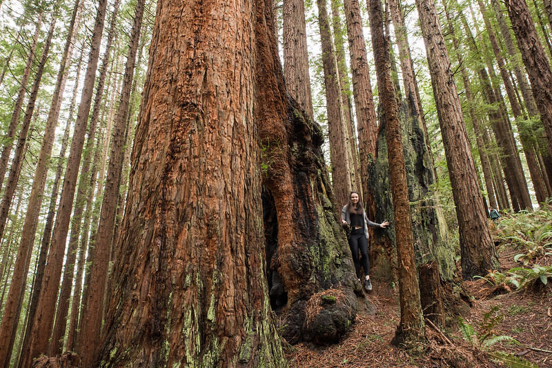 T-S Tip 5:You've got to go check out the redwoods. Spend your lunches and evening out in the community forest exploring and hiking. Some of the largest and most ancient trees are now in your backyard so don't take that lightly. Get out and explore.  Photo provided by HSU