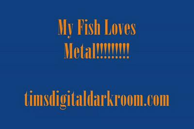 fish metal TLV