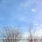 Backyard Breeze Timelapse