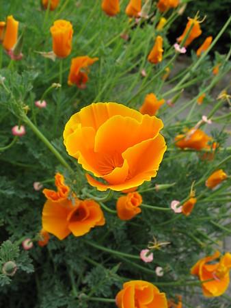Plant Tarot