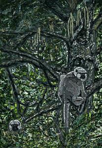 Langurs in an alder grove