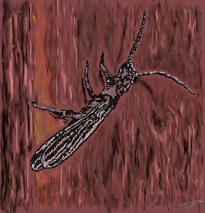 Snakefly
