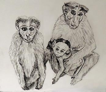 Bonnet macaques