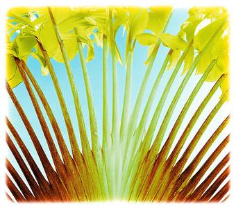 "Traveler's Palm, Fiji  paper 8""x9"" $95 paper 16x18 $290 paper 27x30 $590  canvas 27x30 $650"