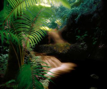 "Onomea Falls, Hawaii  paper 8""x9"" $110 paper 18x22 $420 paper  27x32 $810  canvas 27x32 $900 canvas 36x43 $1680"