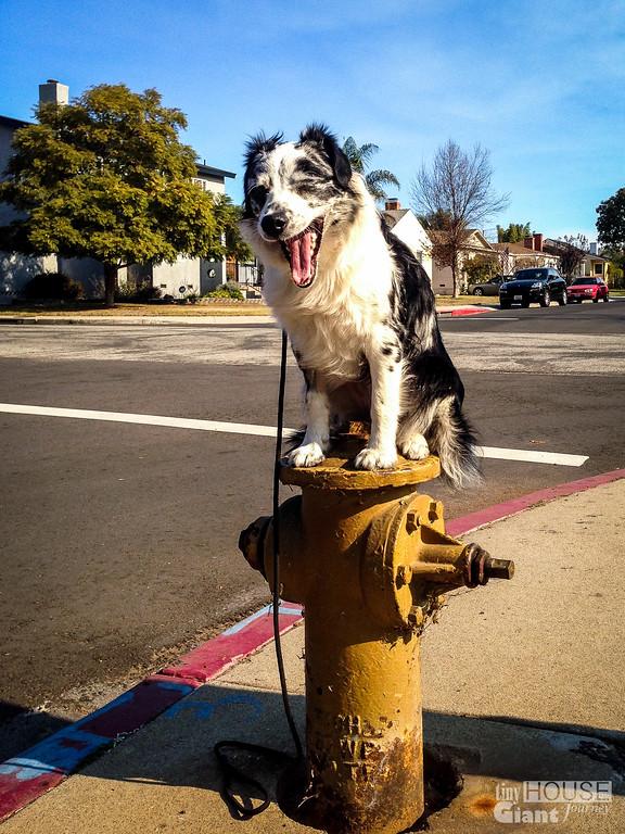 Salies Fire Hydrant - 0001