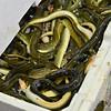 Market - Eels