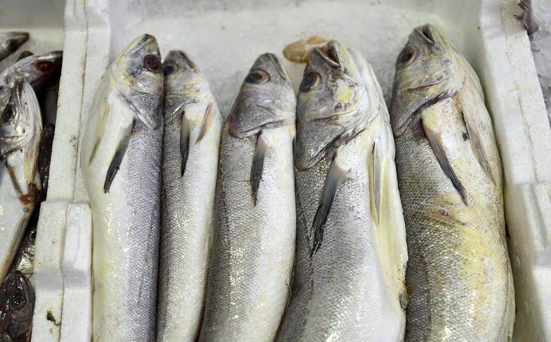 Market - Fish