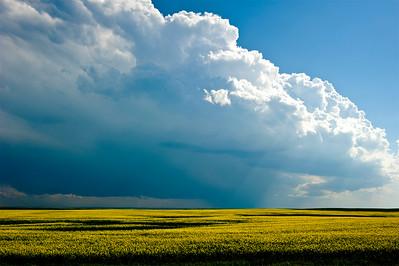 Canola & Thunderstorm- Assiniboia, Saskatchewan, Canada