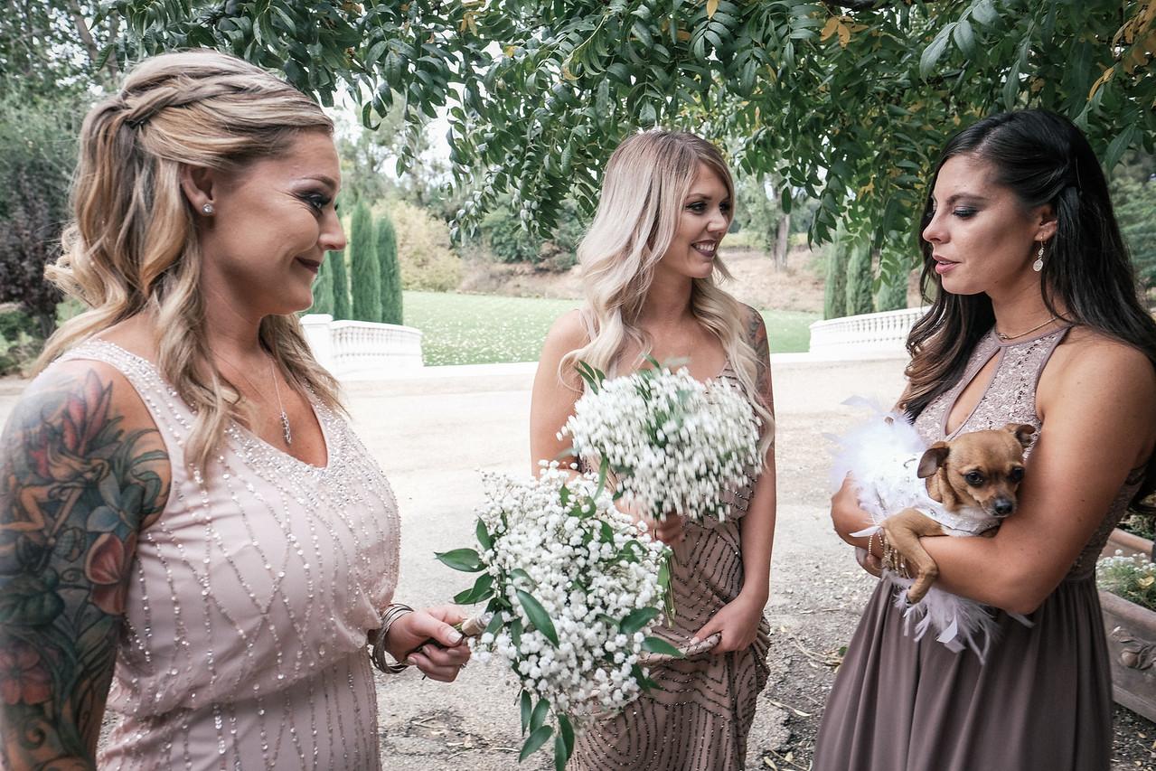 Titlow Wedding-389