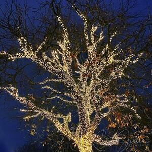 Tivoli; Copenhagen; Denmark; Christmas;