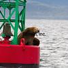 CRUISE2015080532 - Cruise Day#4, Juneau, AK, 8/2015