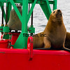 CRUISE2015080536 - Cruise Day#4, Juneau, AK, 8/2015