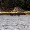 CRUISE2015080522 - Cruise Day#4, Juneau, AK, 8/2015