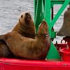 CRUISE2015080557 - Cruise Day#4, Juneau, AK, 8/2015