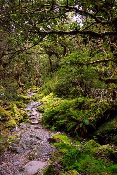 """Mirkwood"" Forest"