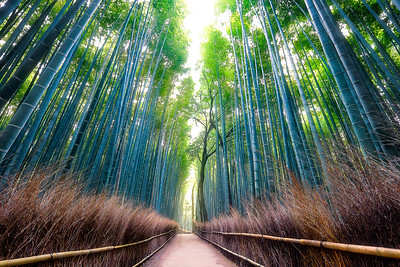 Arashiyama Bamboo Grove – Kyoto, Japan