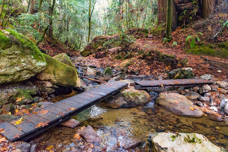 West Waddell Creek, Skyline-to-the-Sea Trail
