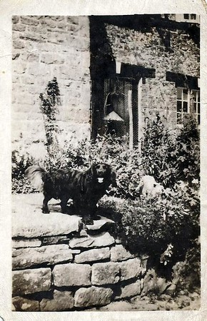 Cottage garden c 1940`s with dog
