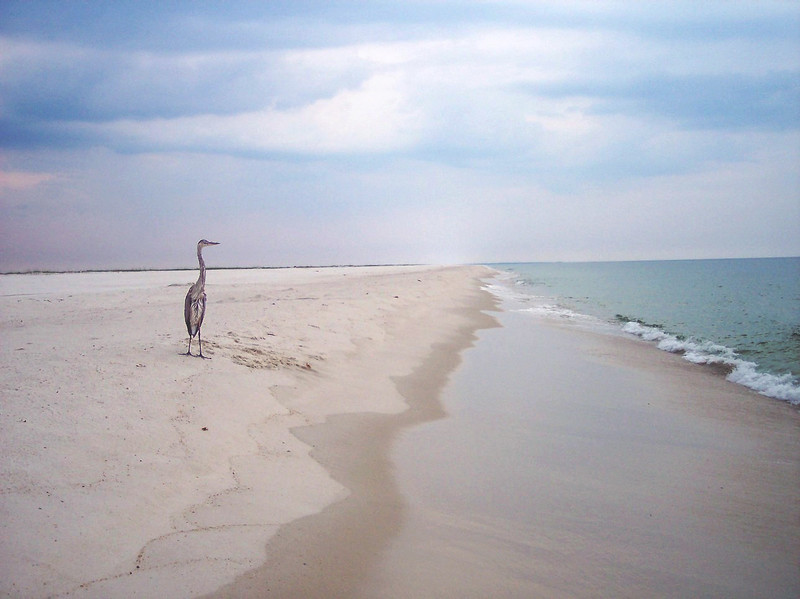 Pensacola Florida - crane on the beach