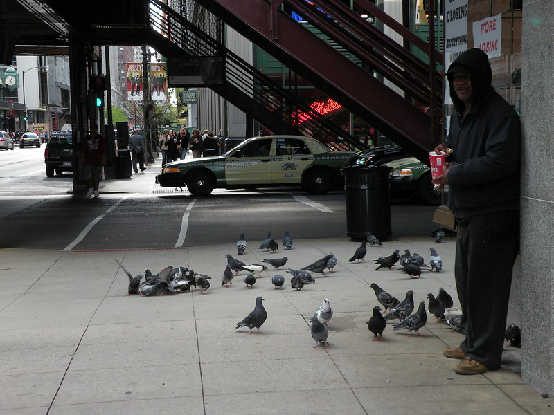 Chicago feeding the pidgeons