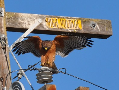 High voltage at Yolo Bypass