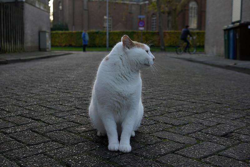 Nederland, Ooltgensplaat, 20-11-2019, foto: Katrien Mulder