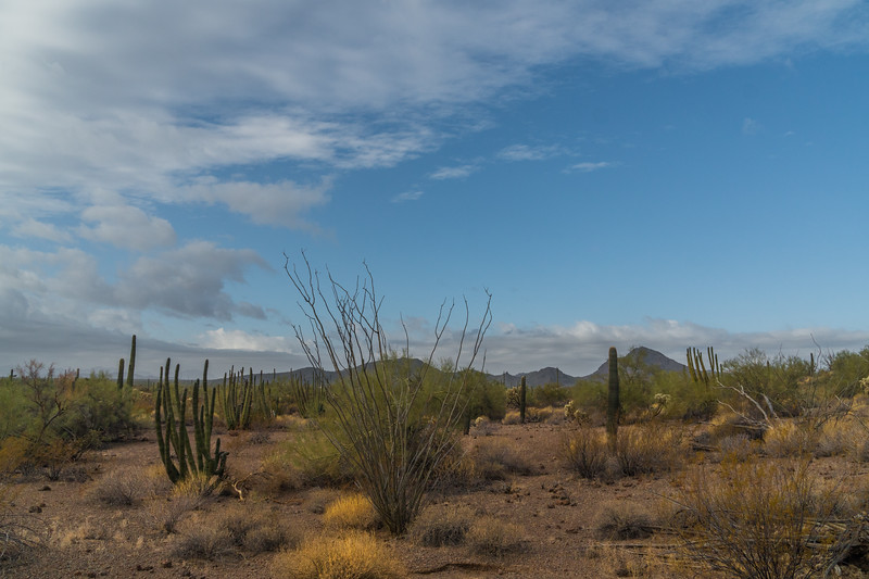 Afternoon Vista, Organ Pipe Cactus National Monument