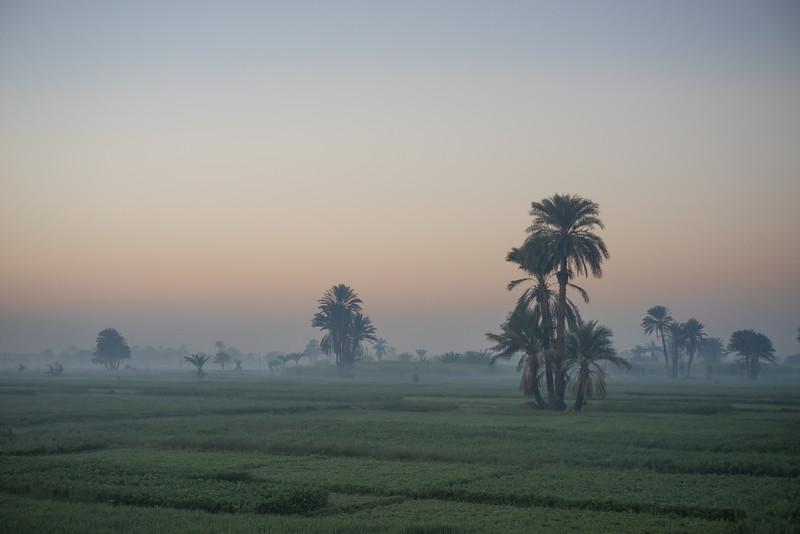 24 de Febrero de 2015 - Campos de trigo y forraje en el valle del Nilo. Luxor. Egipto