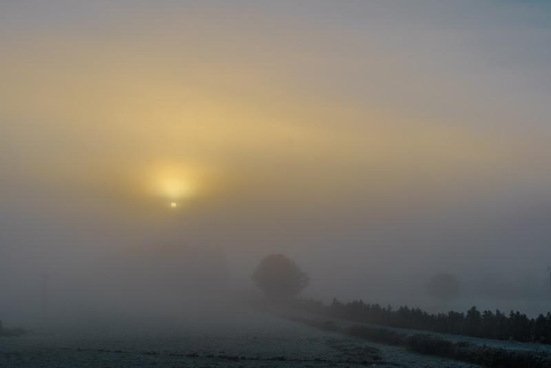 Camino de Santiago Abadín entre la niebla