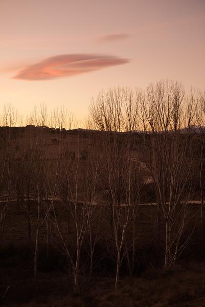 31 de Enero de 2015 - La vida no es producto del azar. Arroyo de Tejada. Tres Cantos