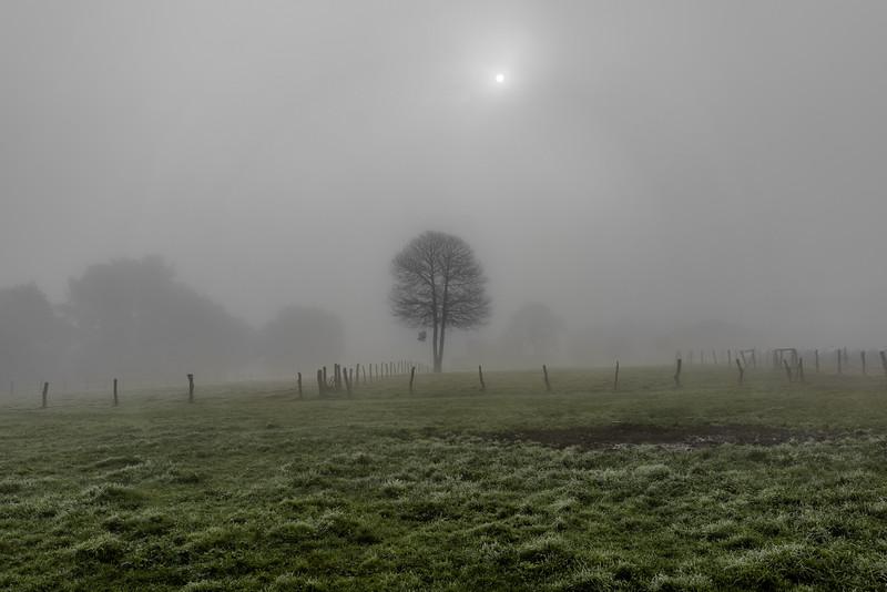 Camino de Santiago Niebla