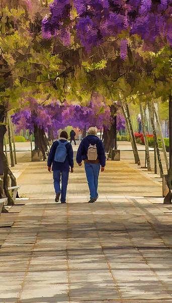 21 de Abril de 2015 - Paseo bajo las glicinias. Av. de Los Encuartes. Tres Cantos